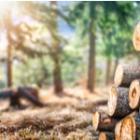Le bois énergie de porte bien