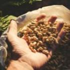 Economies achat pellets vrac