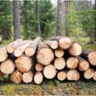 Le bois de chauffage, première énergie renouvelable en france