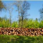 Le chauffage au bois reste une alternative verte