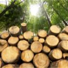Total bûches premium : quelle sont les essences de bois utilisées ?