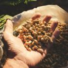 Commande granulés au printemps